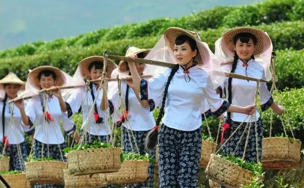 武夷岩茶(大红袍)制作技艺