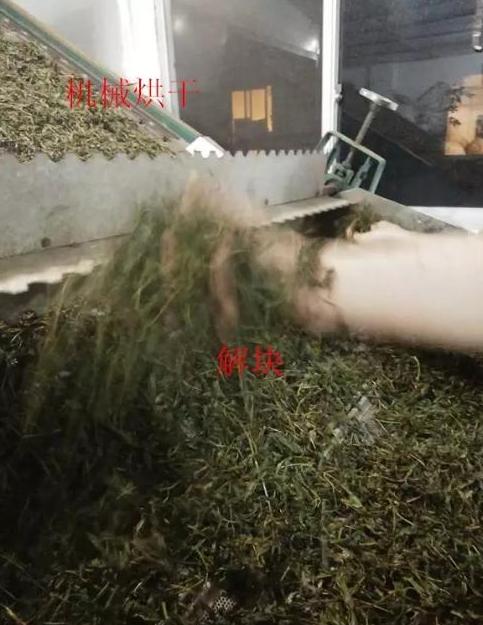 武夷岩茶大红袍的制作工艺流程