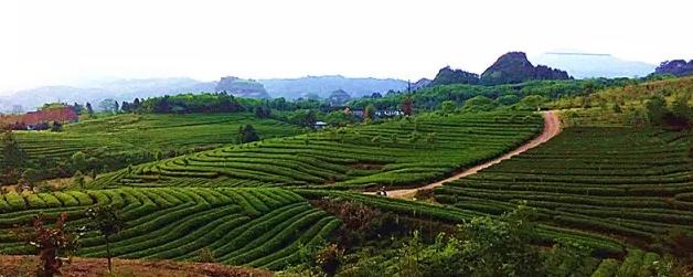茶产业面临机遇与挑战并存