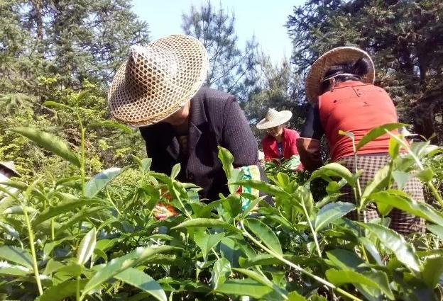 加入WTO对我国茶产业发展带来的机遇与挑战