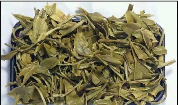 白茶的叶底